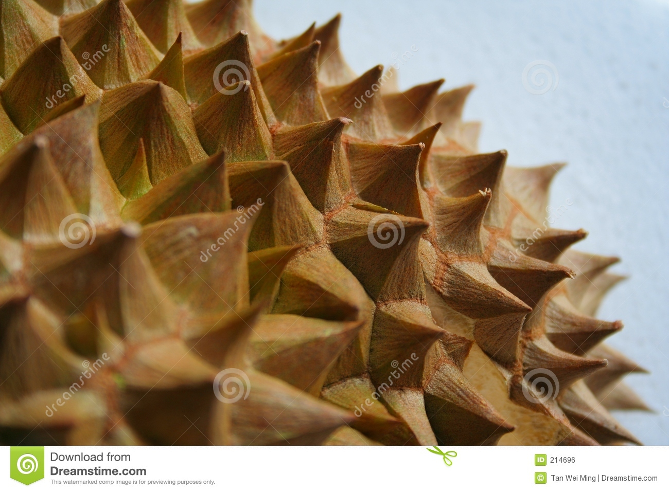 Spine del Durian