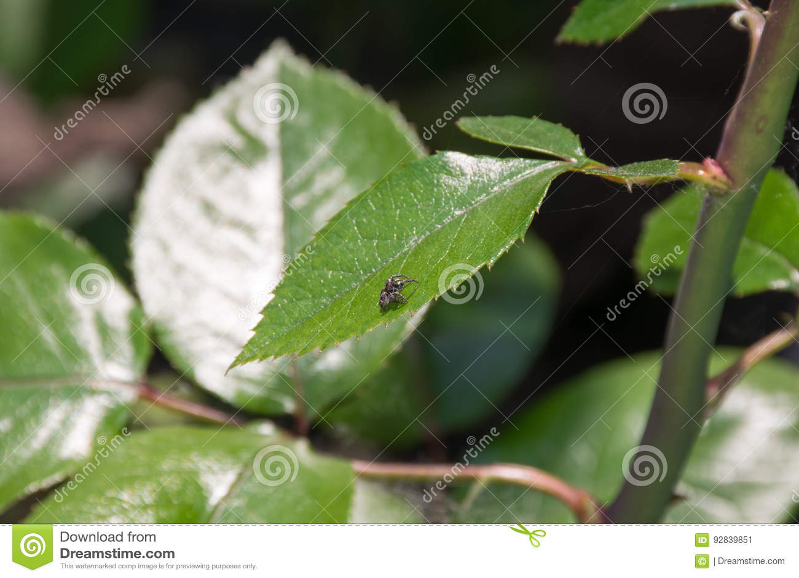 Spinne auf dem Blatt