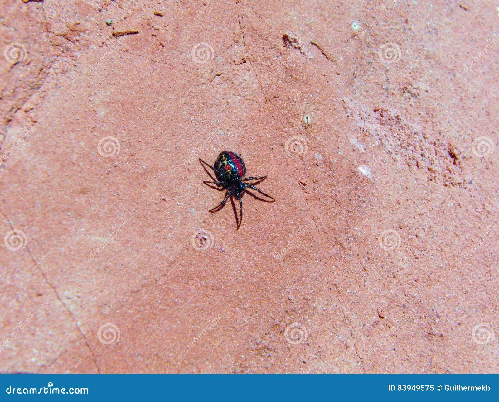 Spinne auf dem Sand