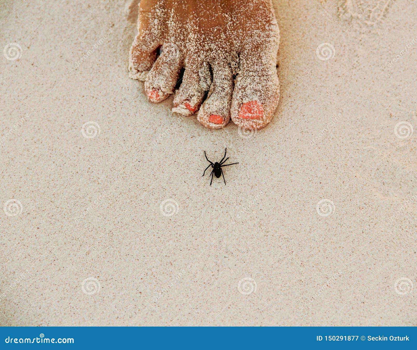 Spinne auf weißem sandigem Strand in Caribbeans