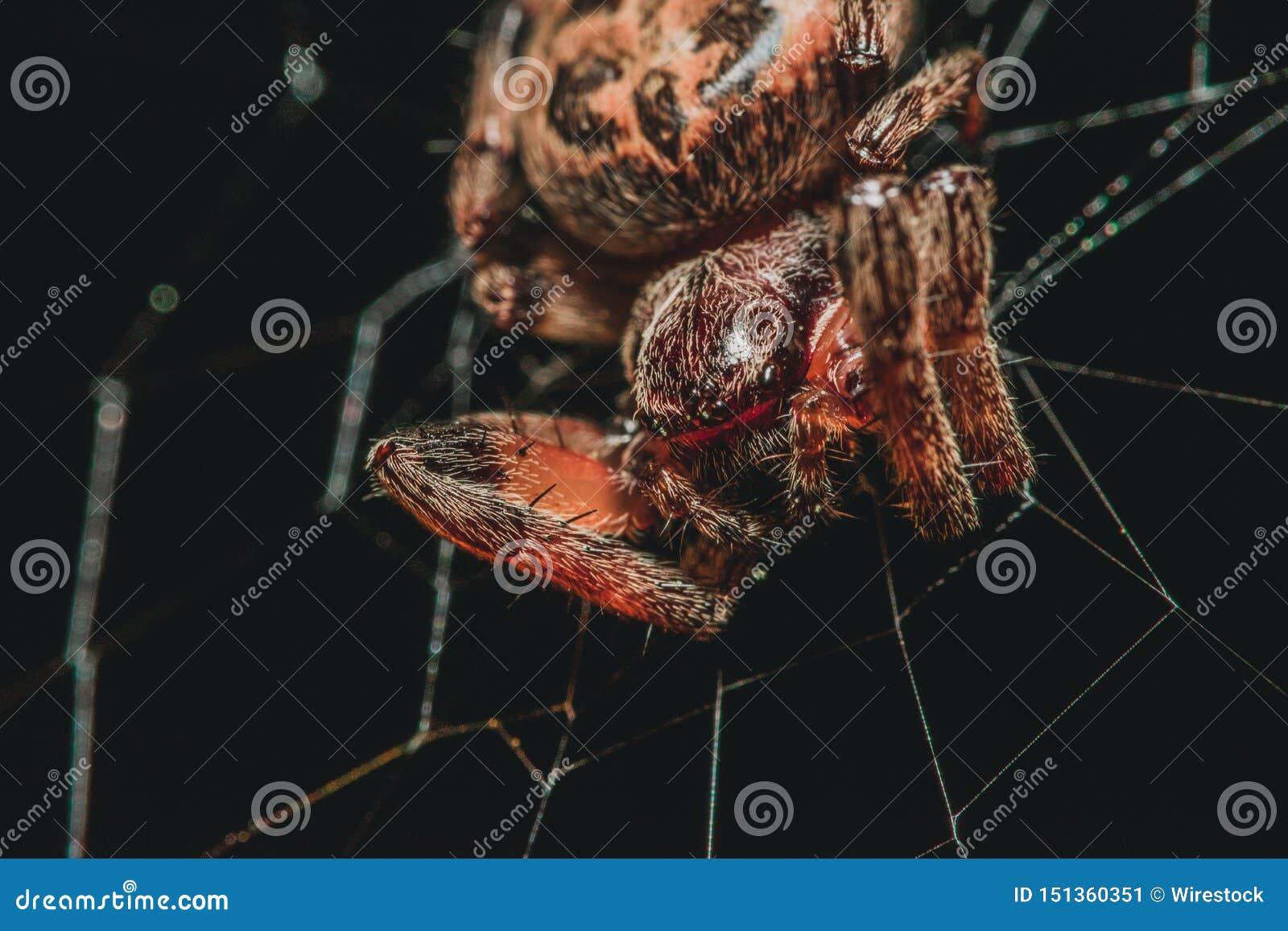 Spinne in einem Web