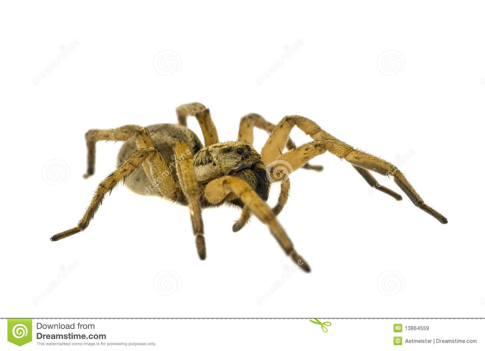 Spinne getrennt auf weißem Hintergrund