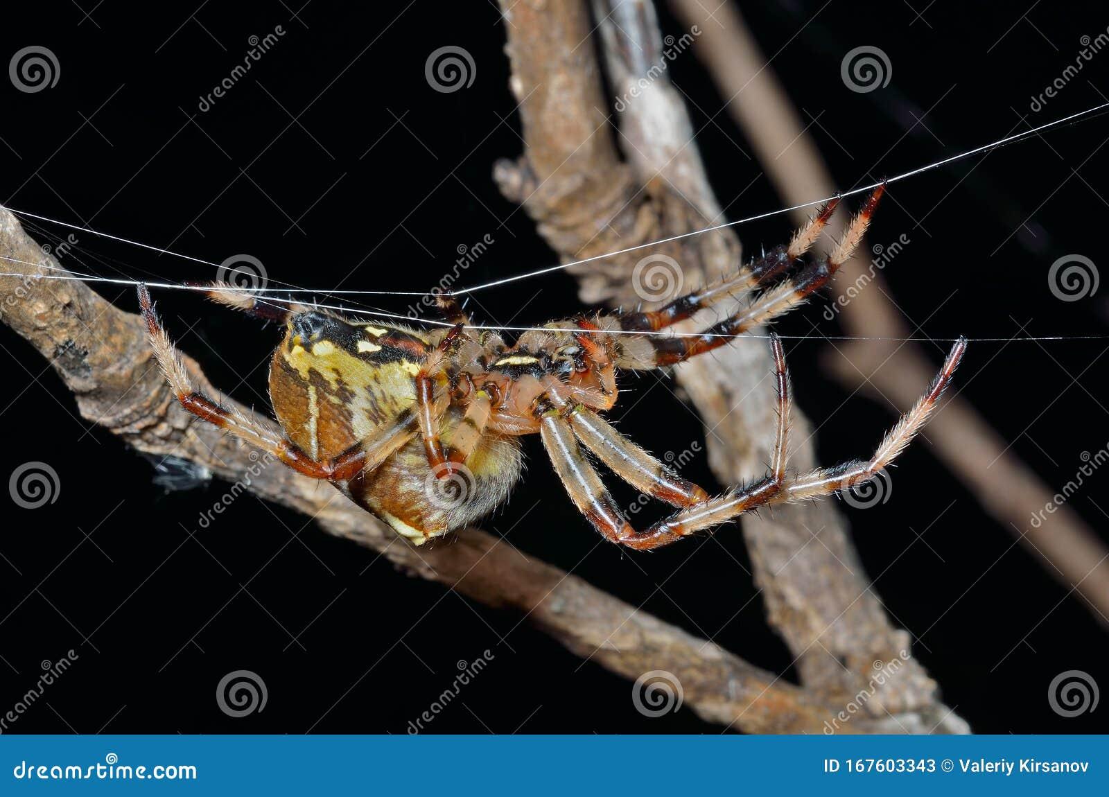 spinne im spinnennetz 38 stockbild bild von bedeutung