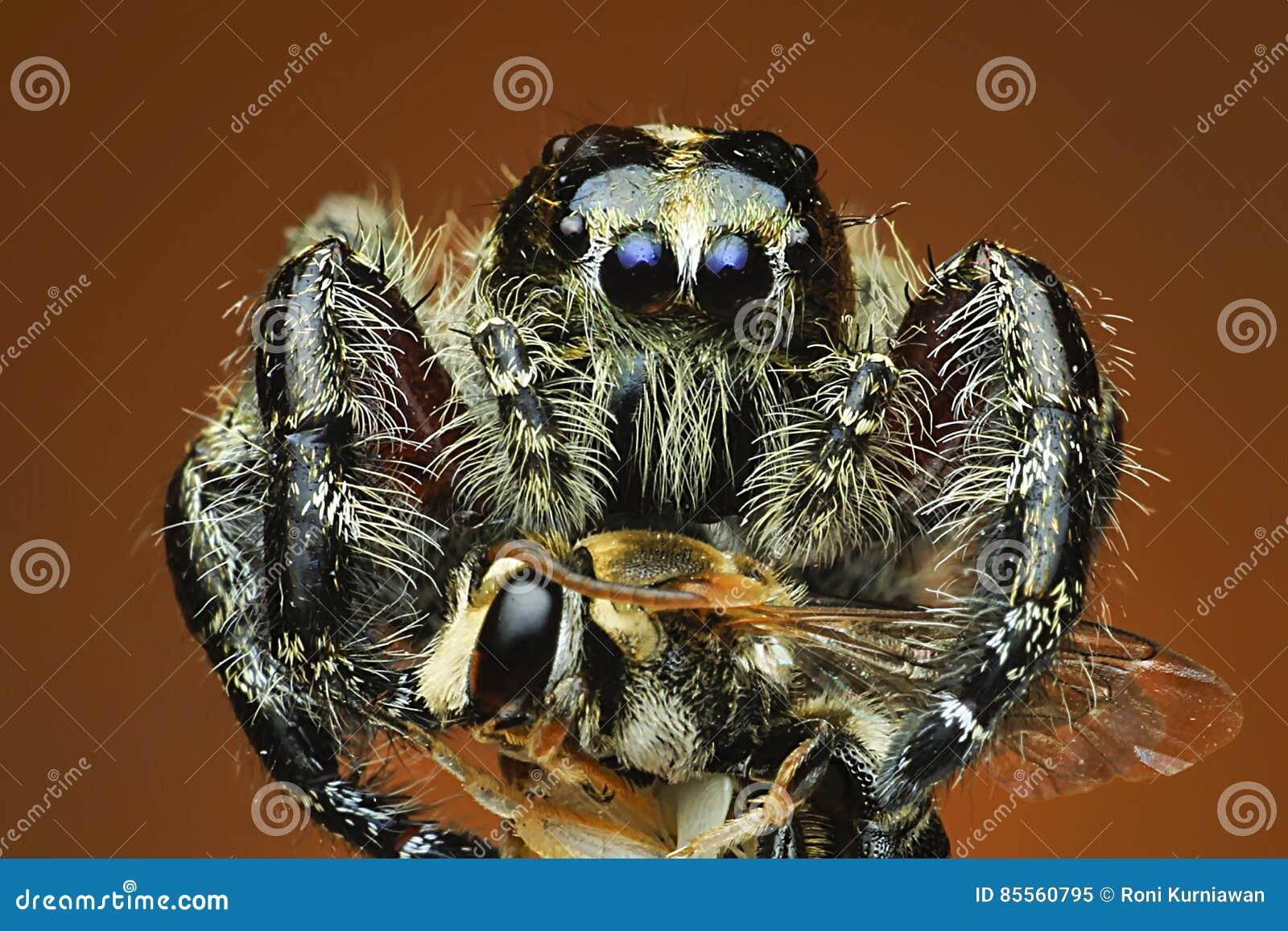 Spinne nahes hohes exrtime