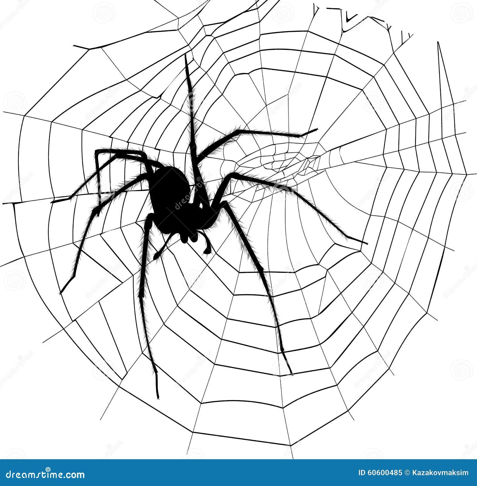spinne und spinnennetz vektor abbildung illustration von