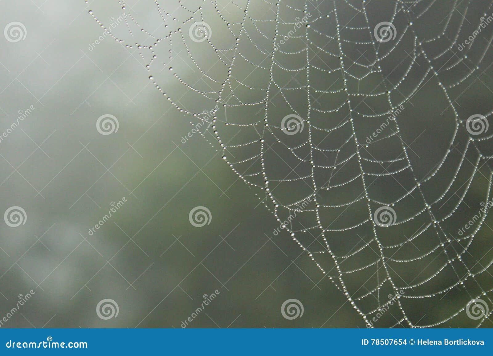 Spinnen-Netz mit regnerischen Tropfen