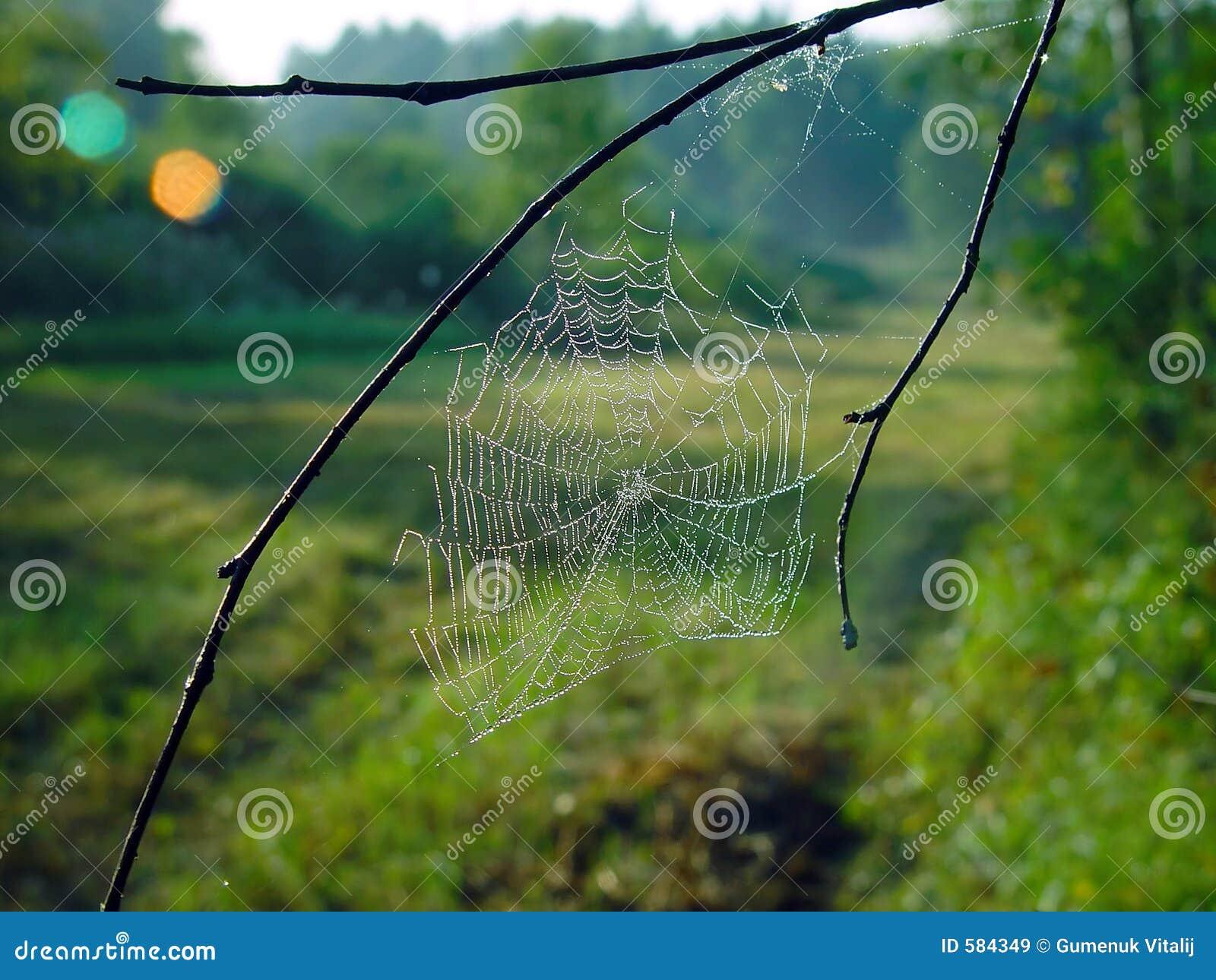 Spinnennetz.
