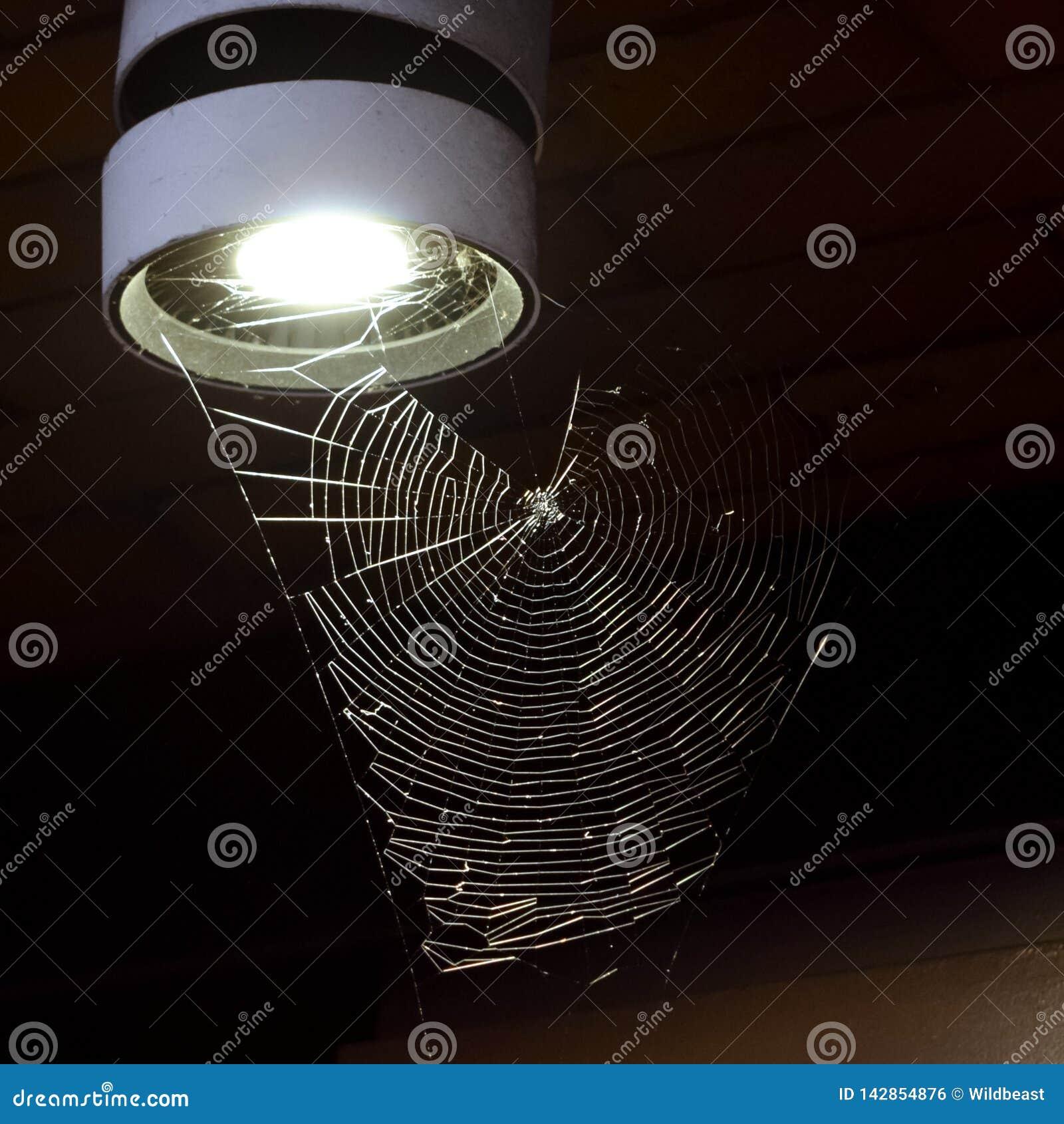 Spinnennetz auf einer Laterne nachts