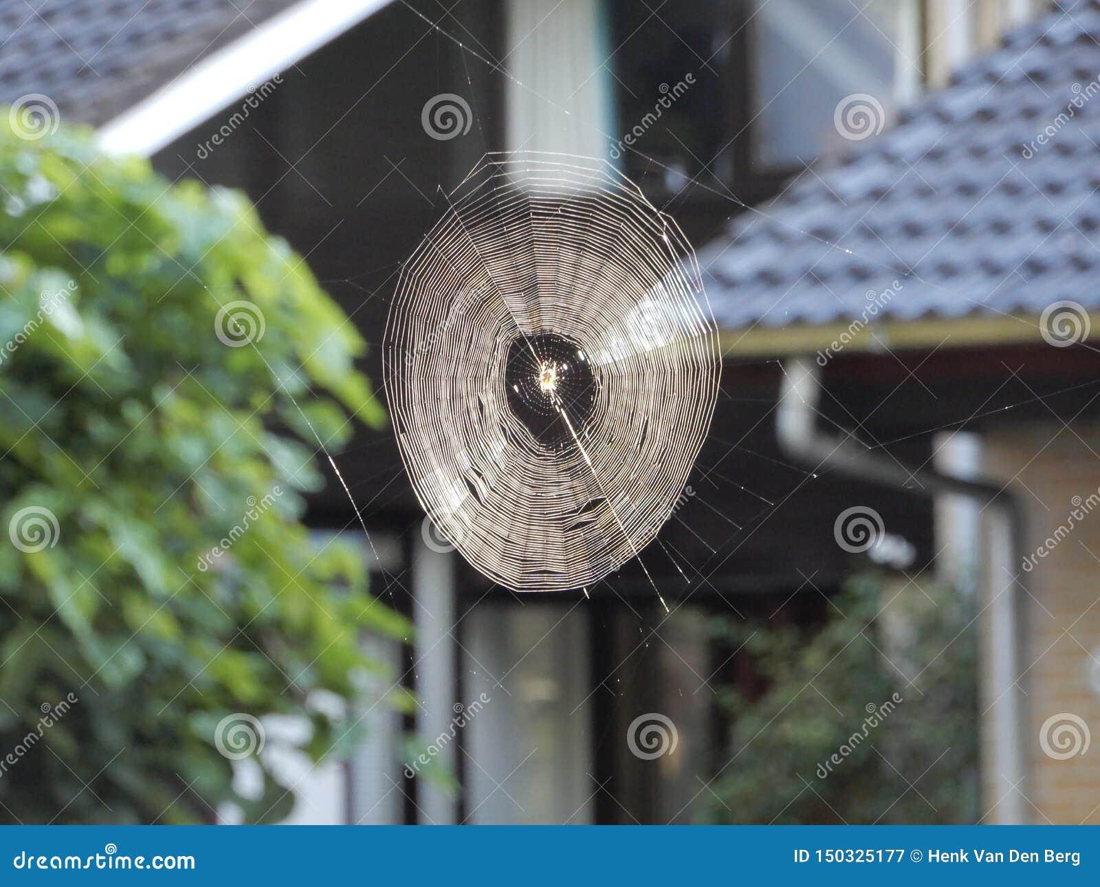 Spinnennetz am frühen Morgen umfasst mit Tau