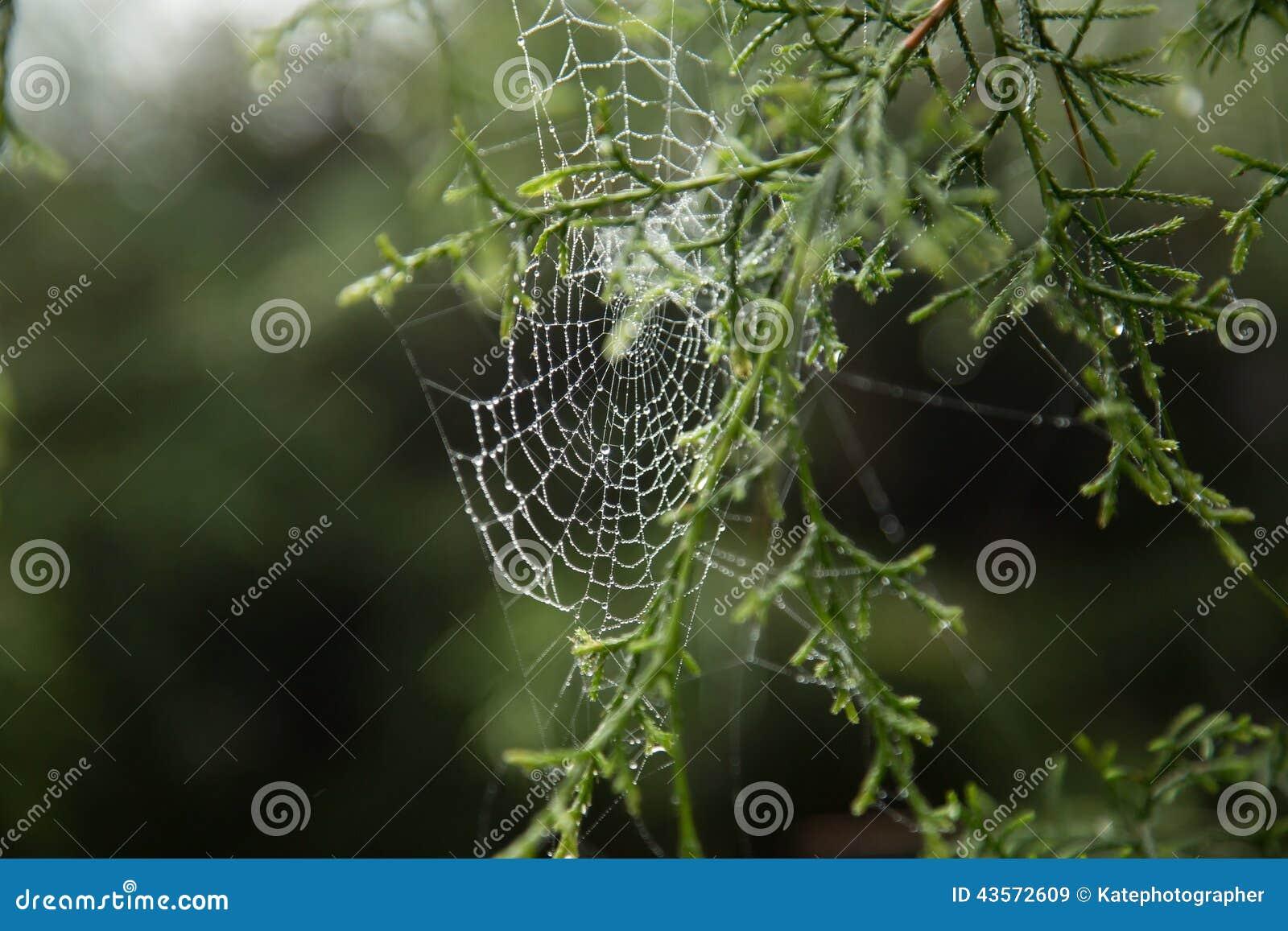 Spinnennetz und Tautropfen