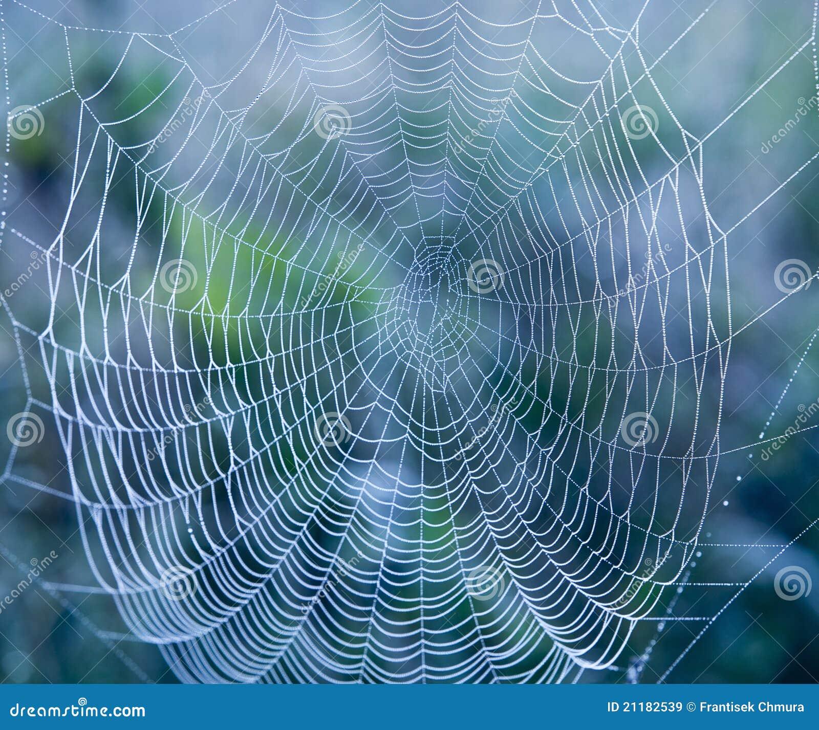 Spinneweb