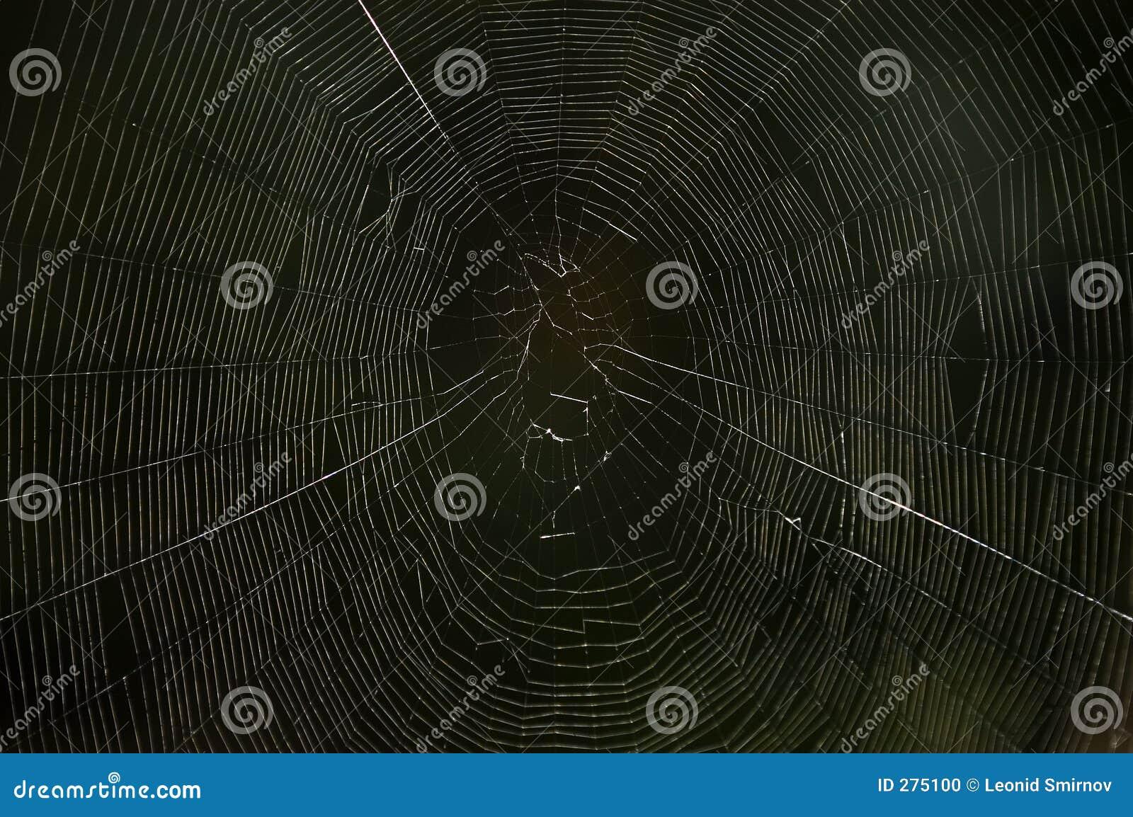 Spinneweb in dark