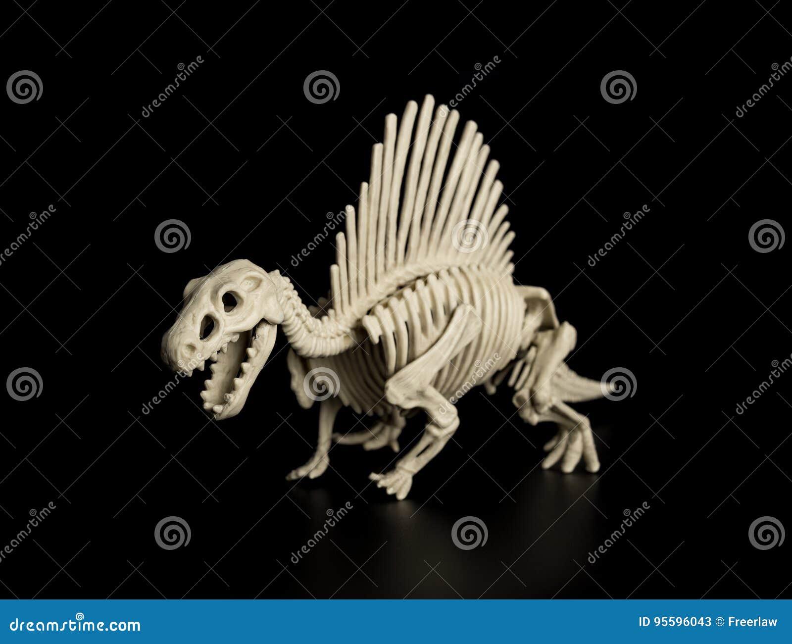 Spinosaurus skelett