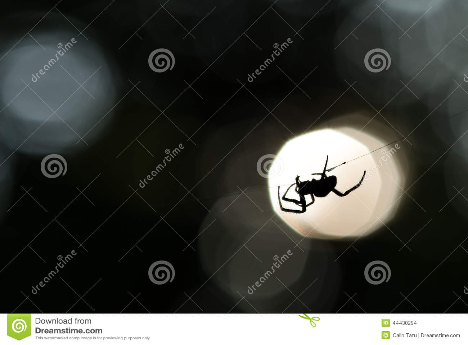 Spinsilhouet op een Web
