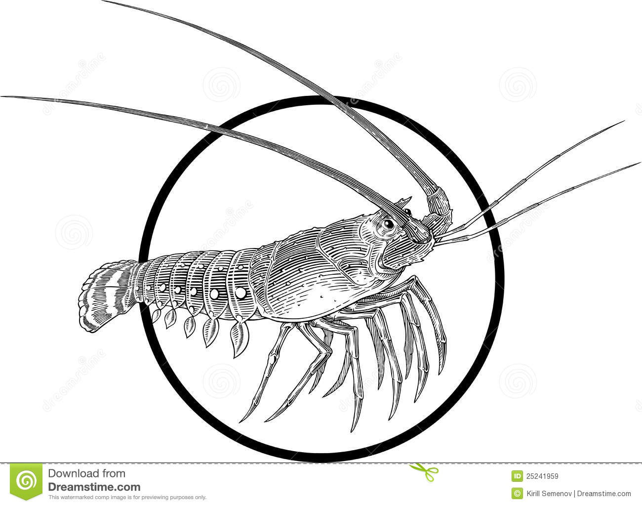 Spiny Lobster Royalty Free Stock Images - Image: 25241959