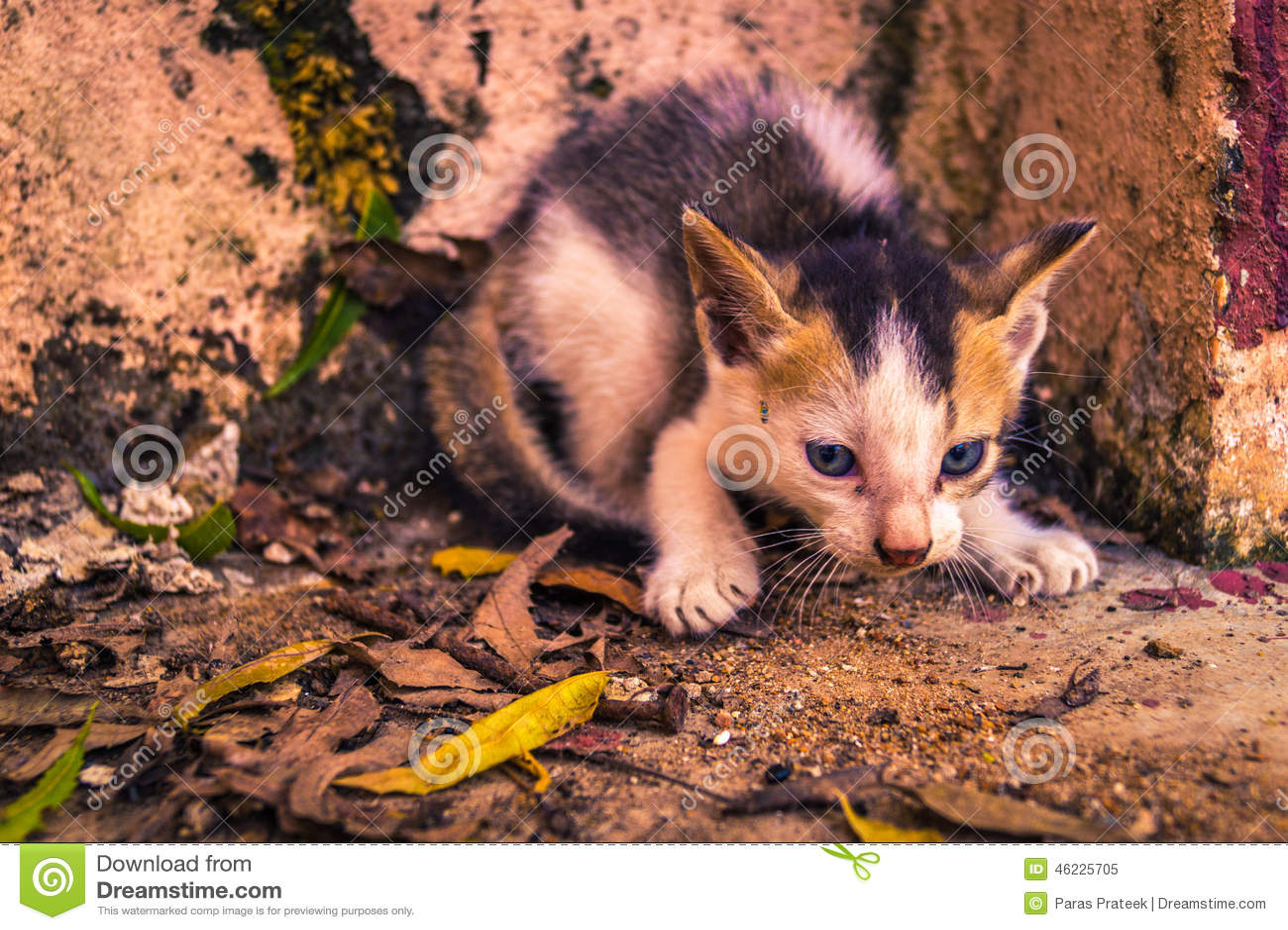 Spionera för kattungar