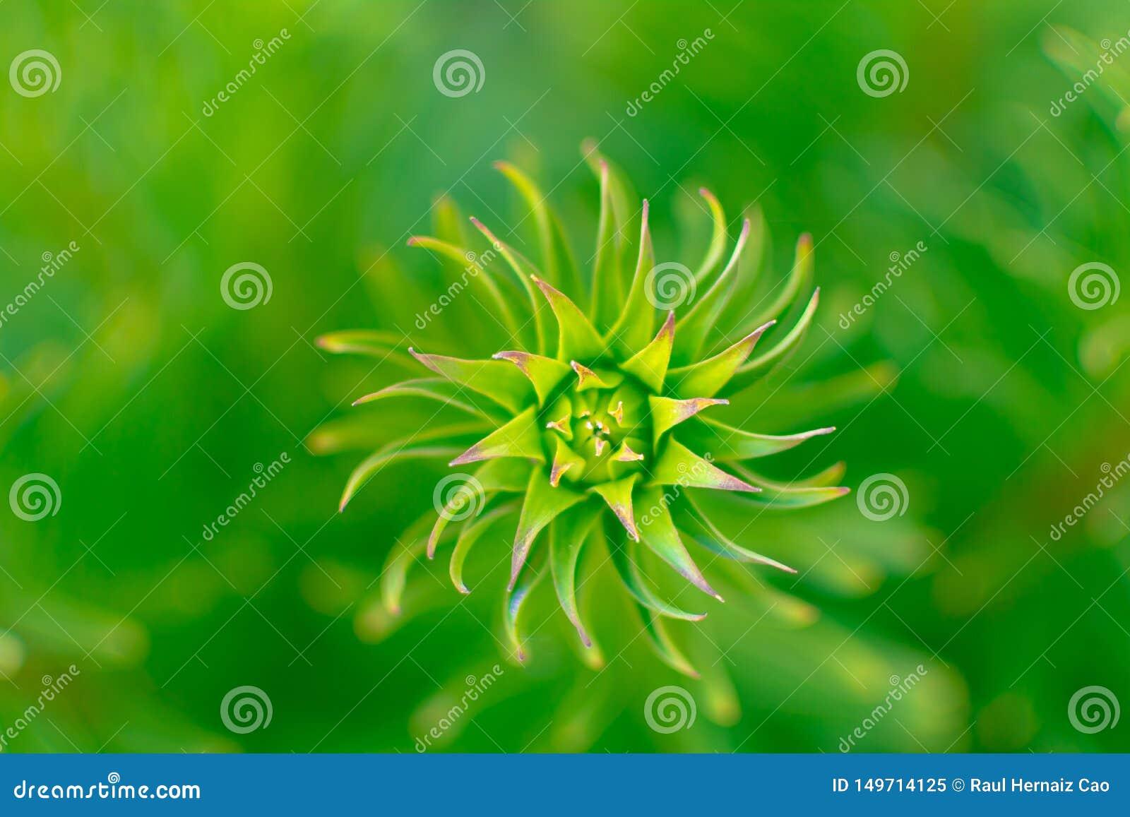 Spiraal van de Hipnotic de abstracte groene installatie, over een vage achtergrond