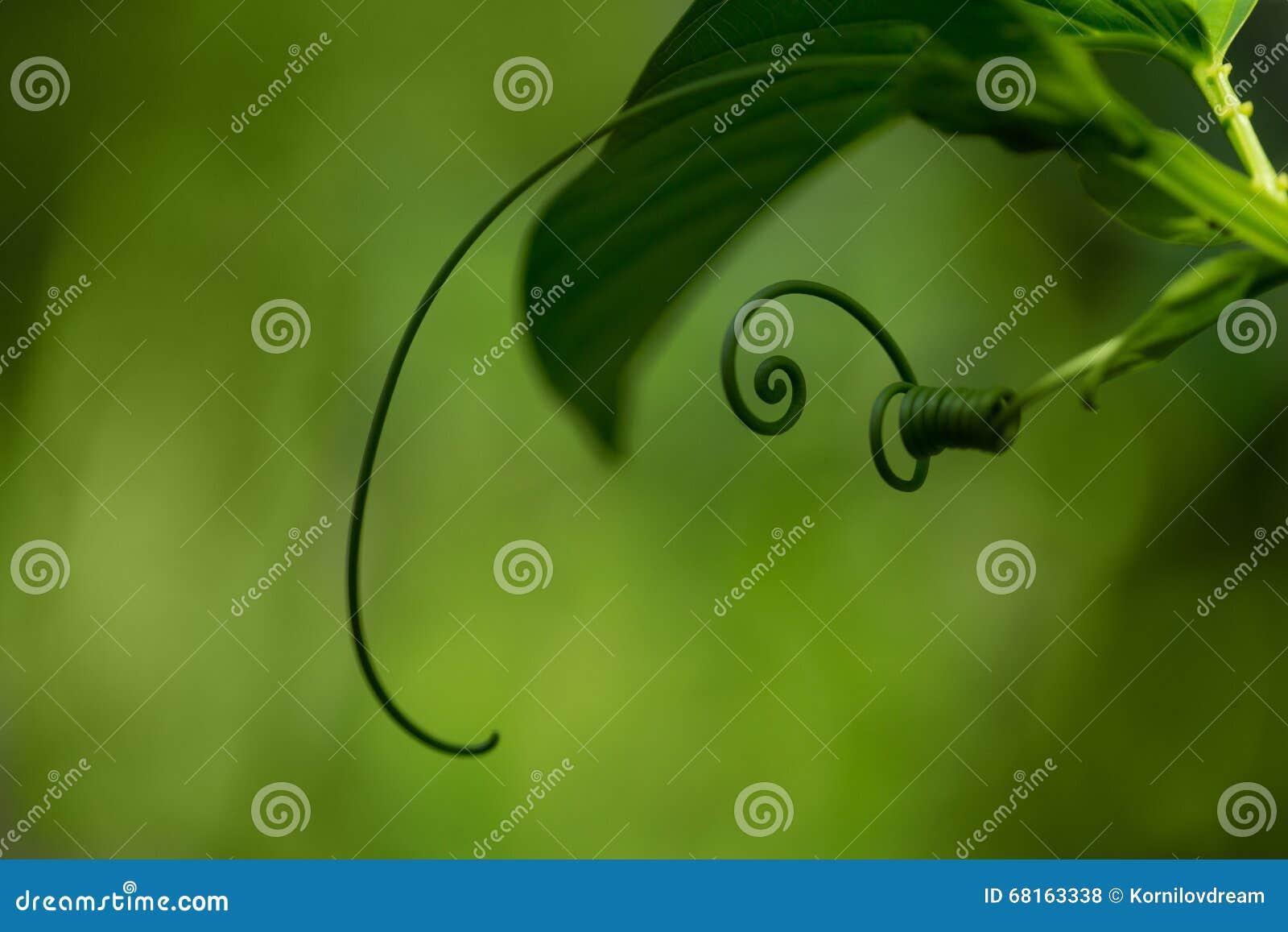 Spiraalvormig groen blad