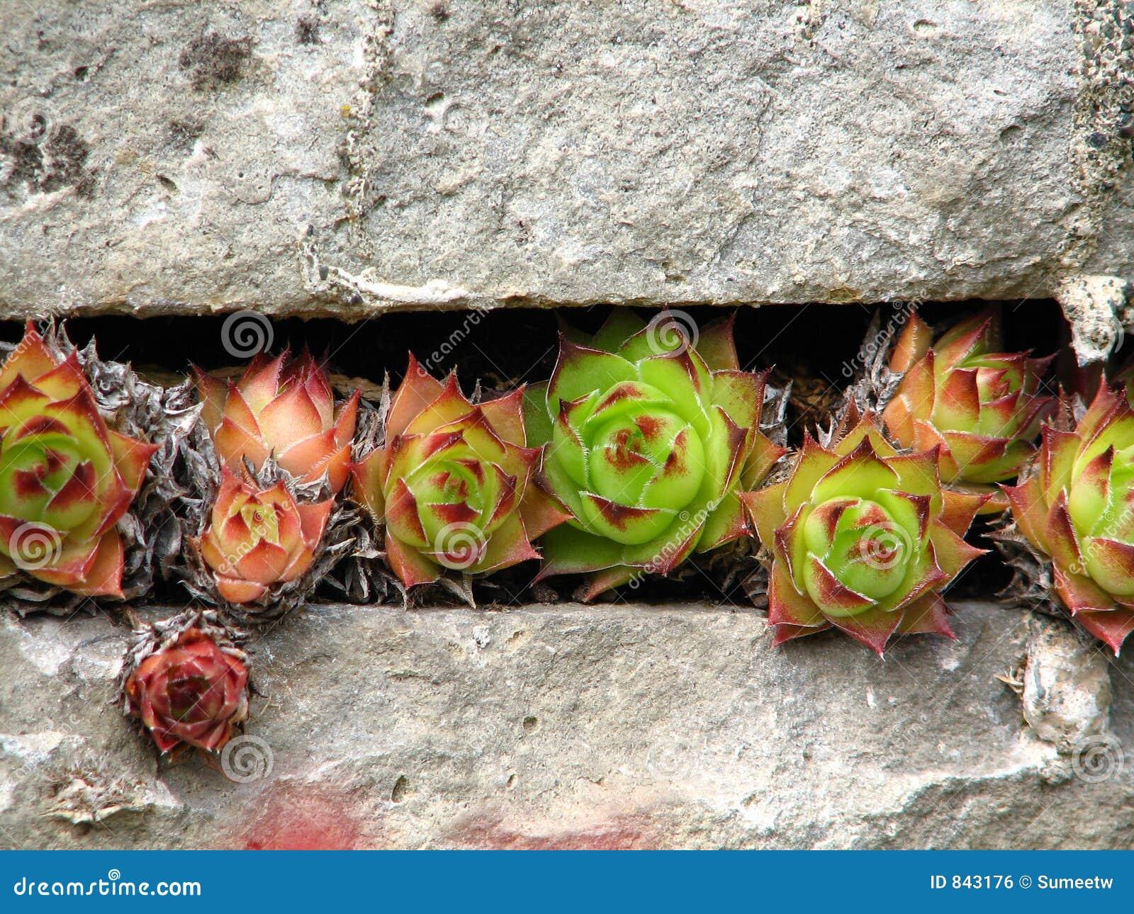 spiral cactus growth