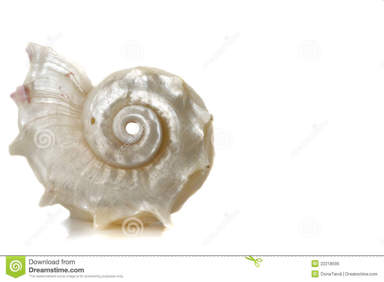 Spiral Sea Shell Stock Image Image Of Mollusc Water