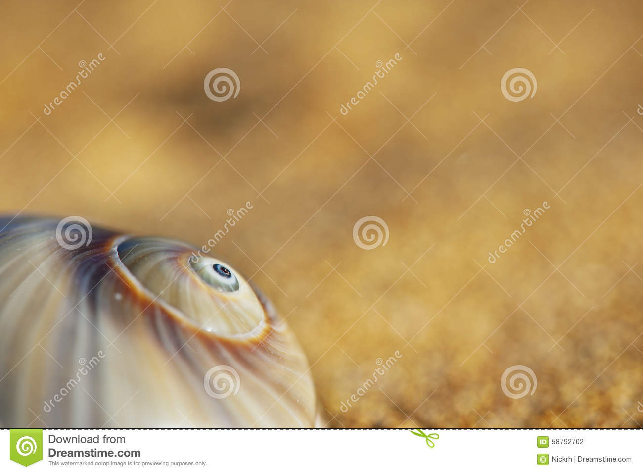 Spiral seashell stock photo image