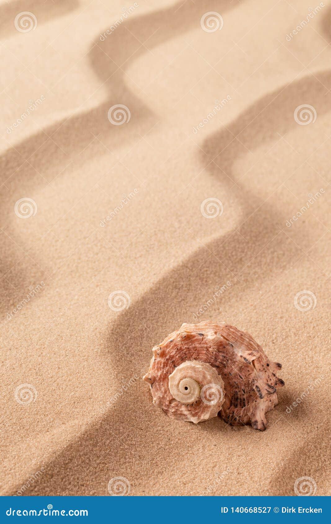 Spiral seashell on tropical beach sand