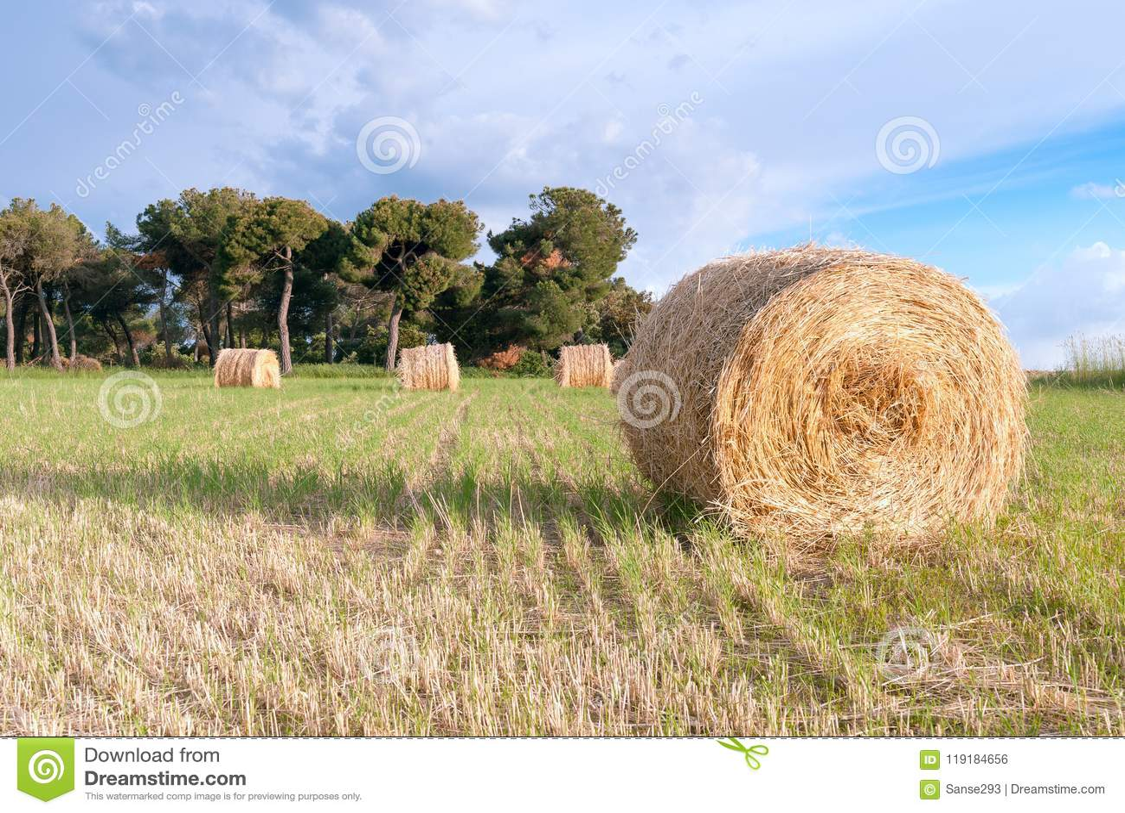 Spirale di fieno in priorità alta con fondo rustico del campo