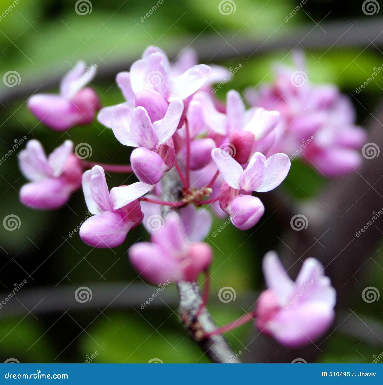 Spirande blommor