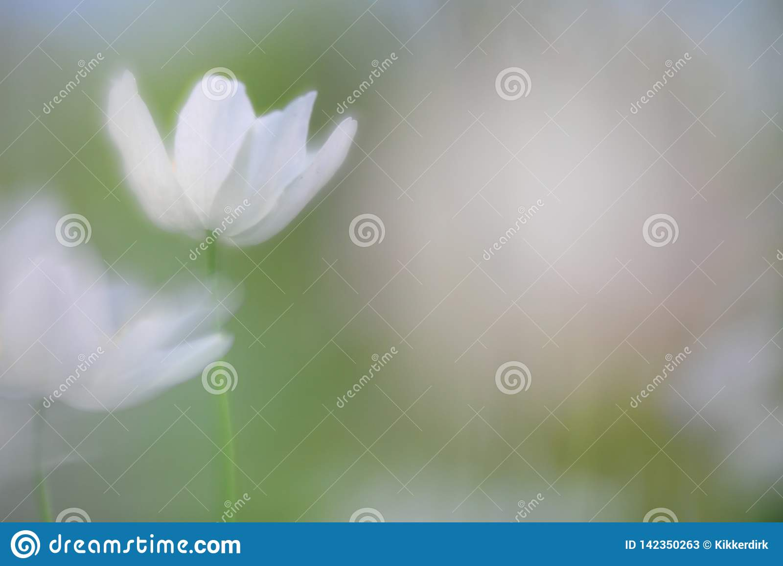 Spirit of a wood anemone