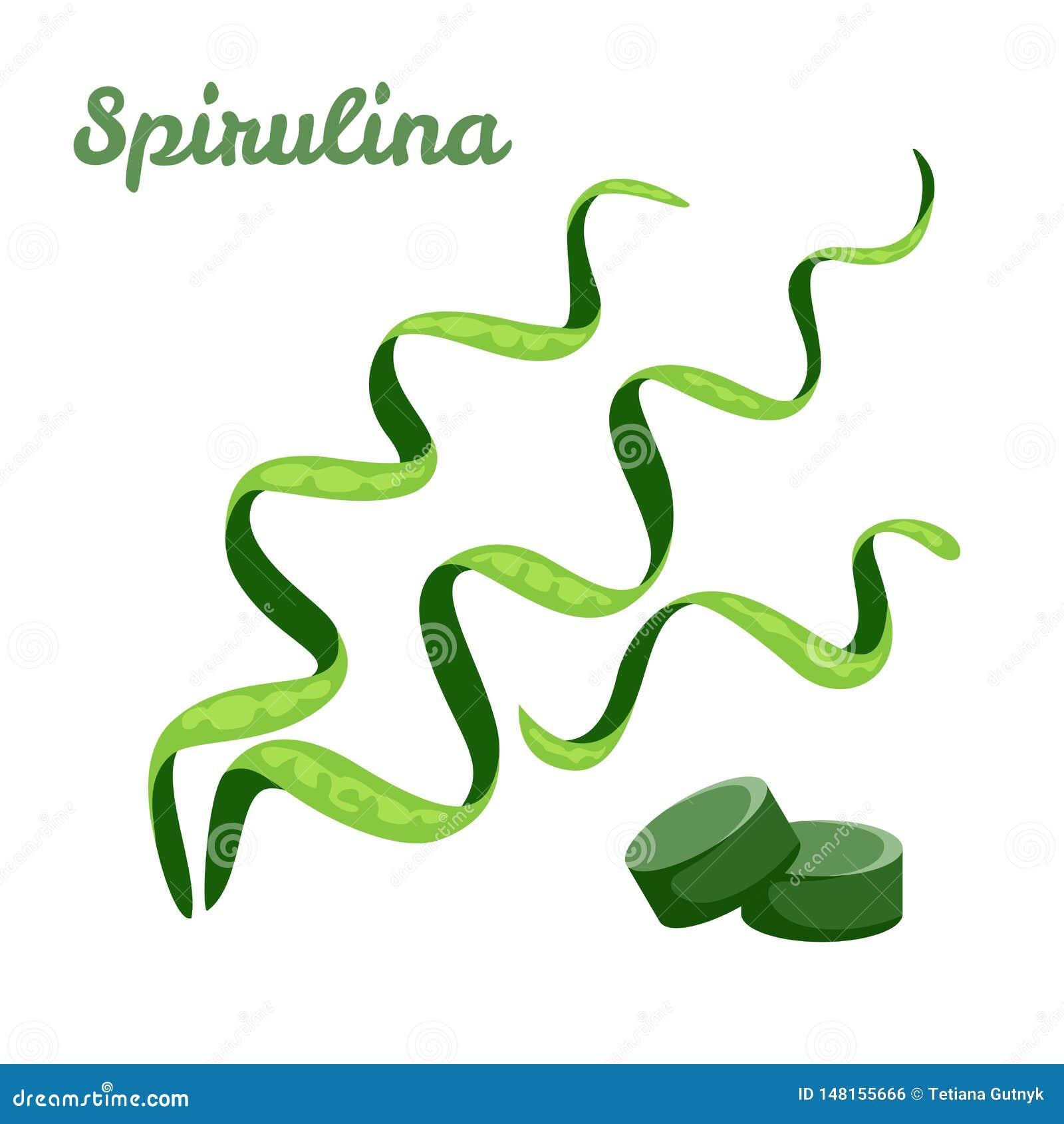 Spirulina aisl? en el fondo blanco Tabletas de la alga marina