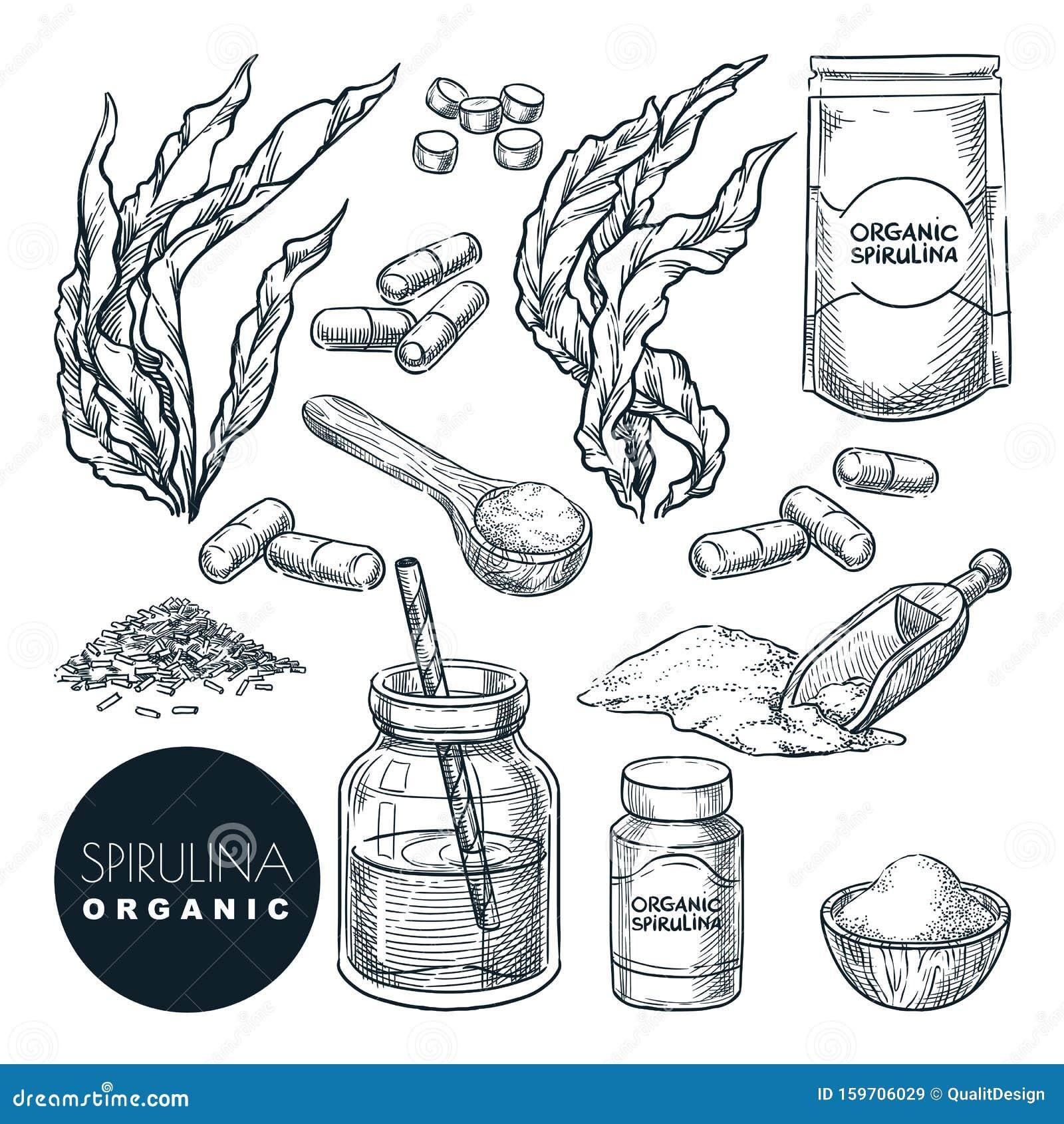 Kelp Powder Stock Illustrations 15 Kelp Powder Stock Illustrations Vectors Clipart Dreamstime
