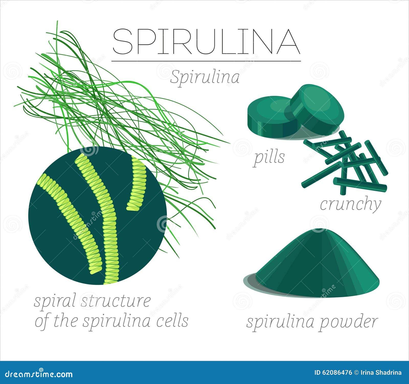 Superfood spirulina. Blue-green algae in the form of tablets, broken ...