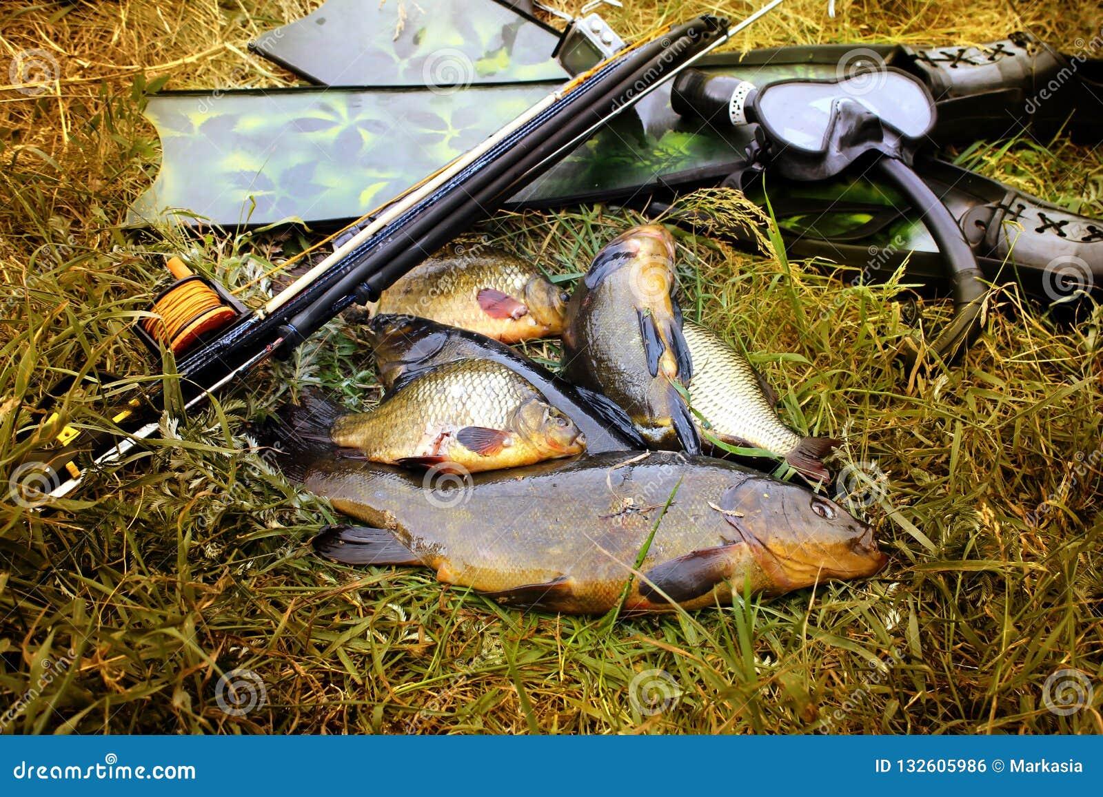 Spitted Undervattens- vapen, fena och fisk på stranden