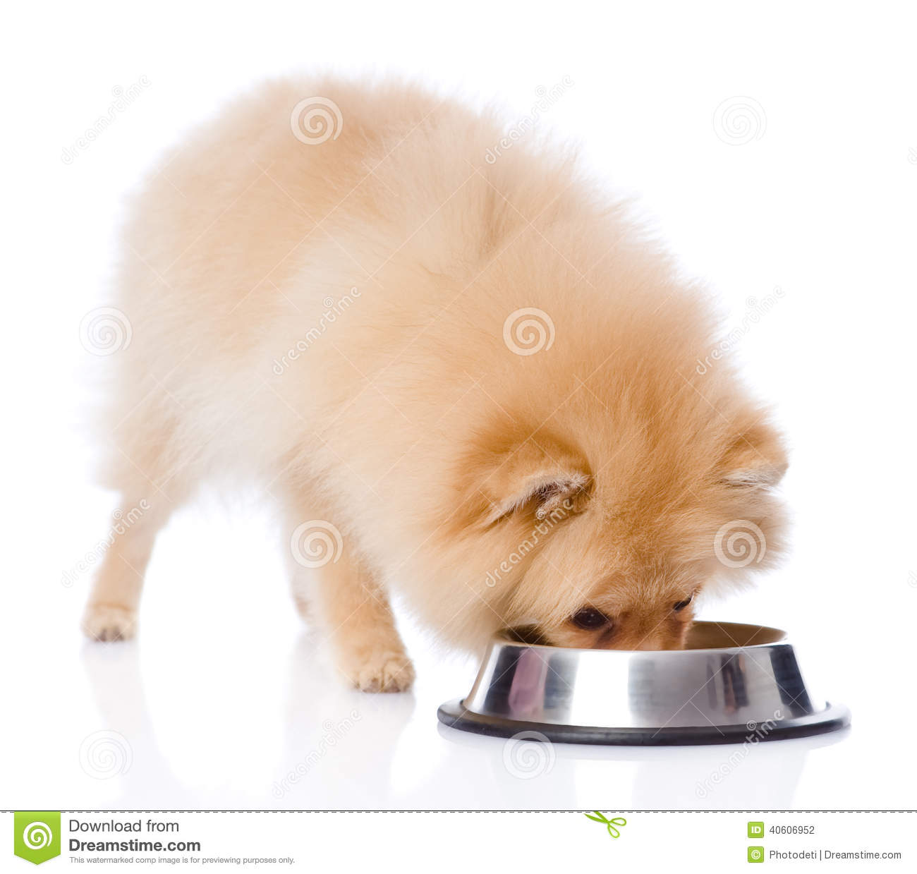 eating the dog food The first ingredient in your dog's food should be a specified meat not a meat by-product, but the real thing puppies and adult dogs were not meant to eat corn and wheat.