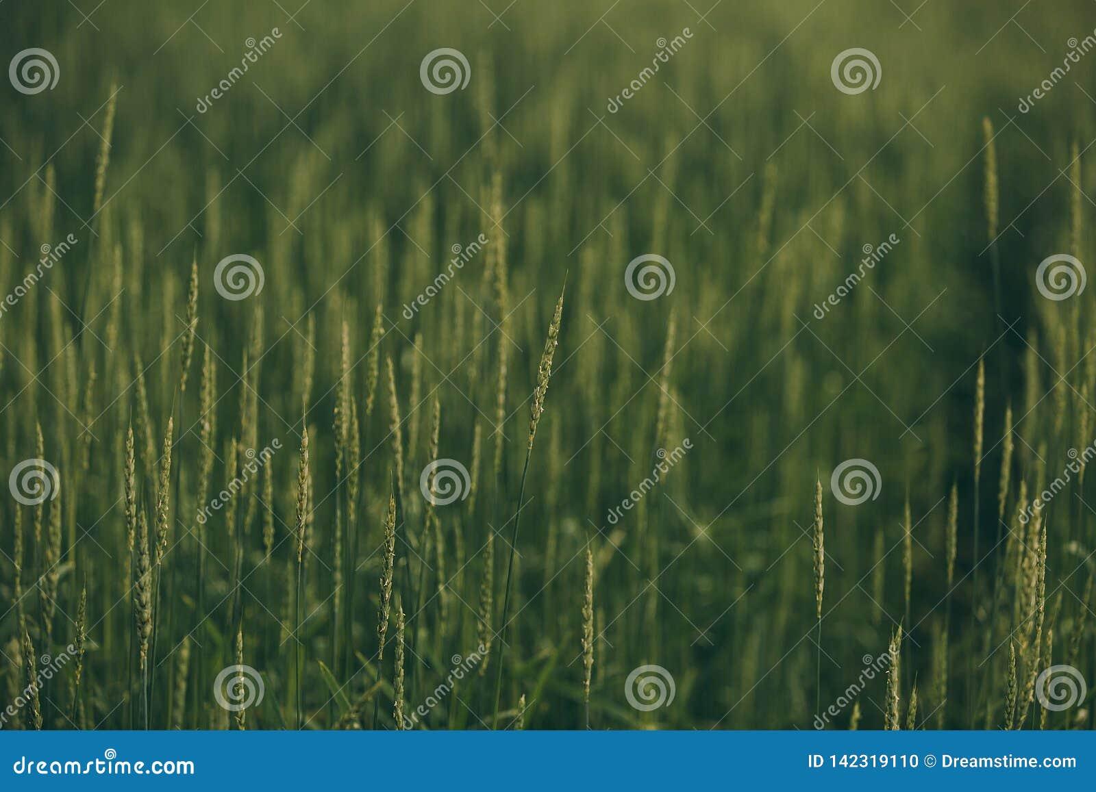 Spitzen auf einem grünen Gebiet