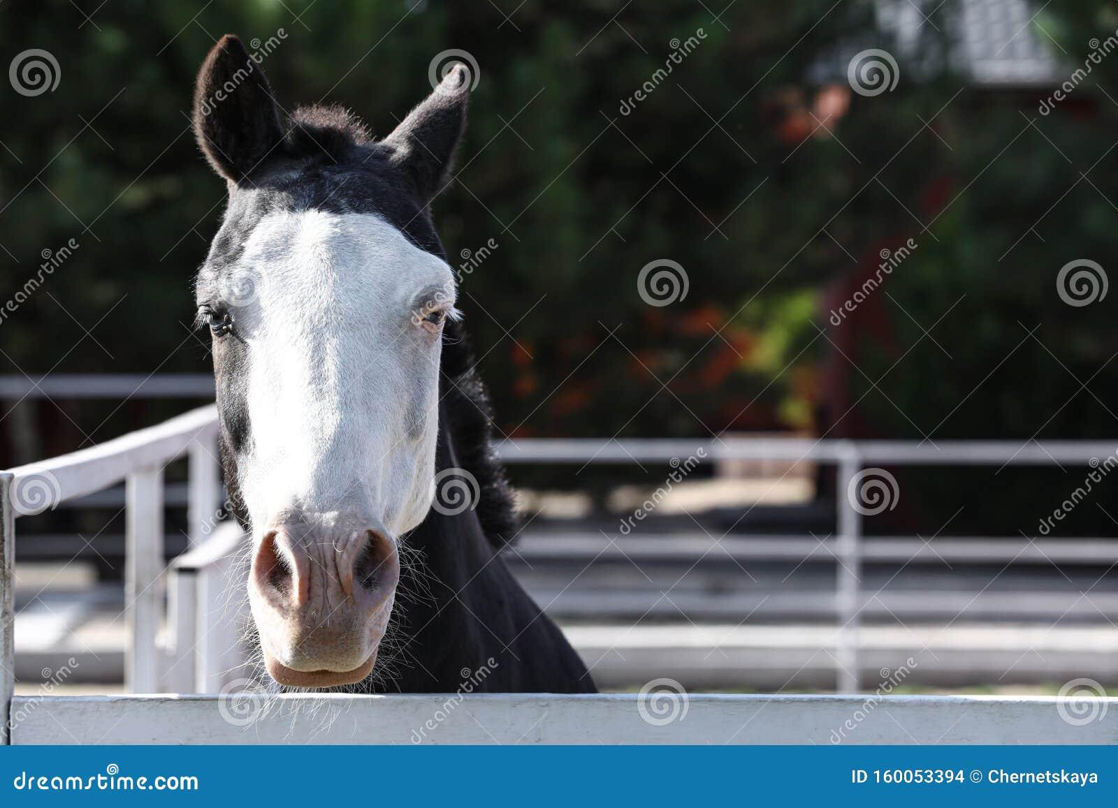 Splashed White Horse At Light Fence Stock Photo Image Of Fauna Light 160053394