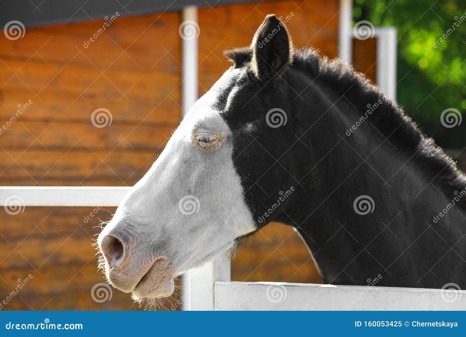 Splashed White Horse At Light Fence Stock Image Image Of Breed Horse 160053425