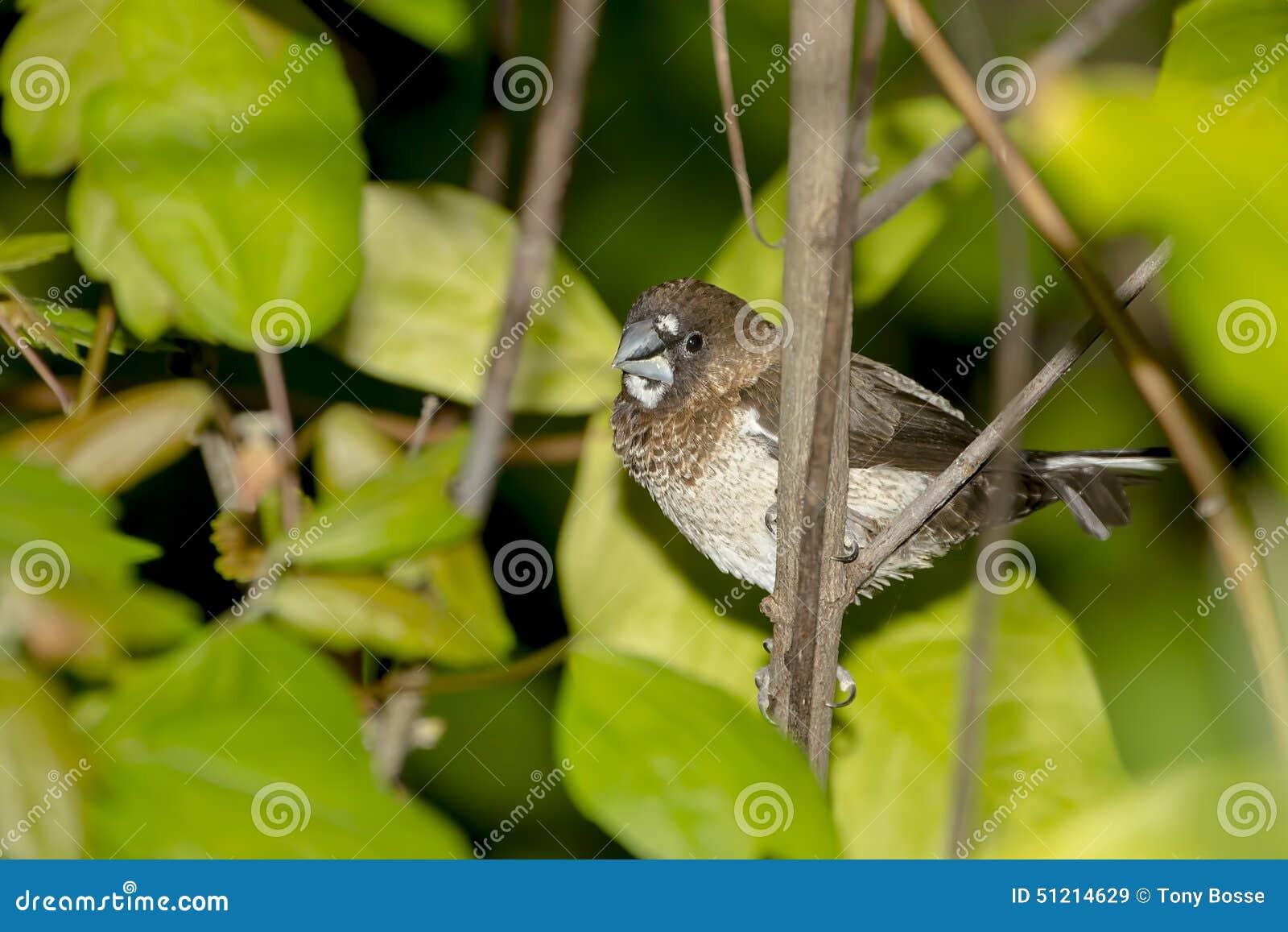 Społeczeństwa Finch