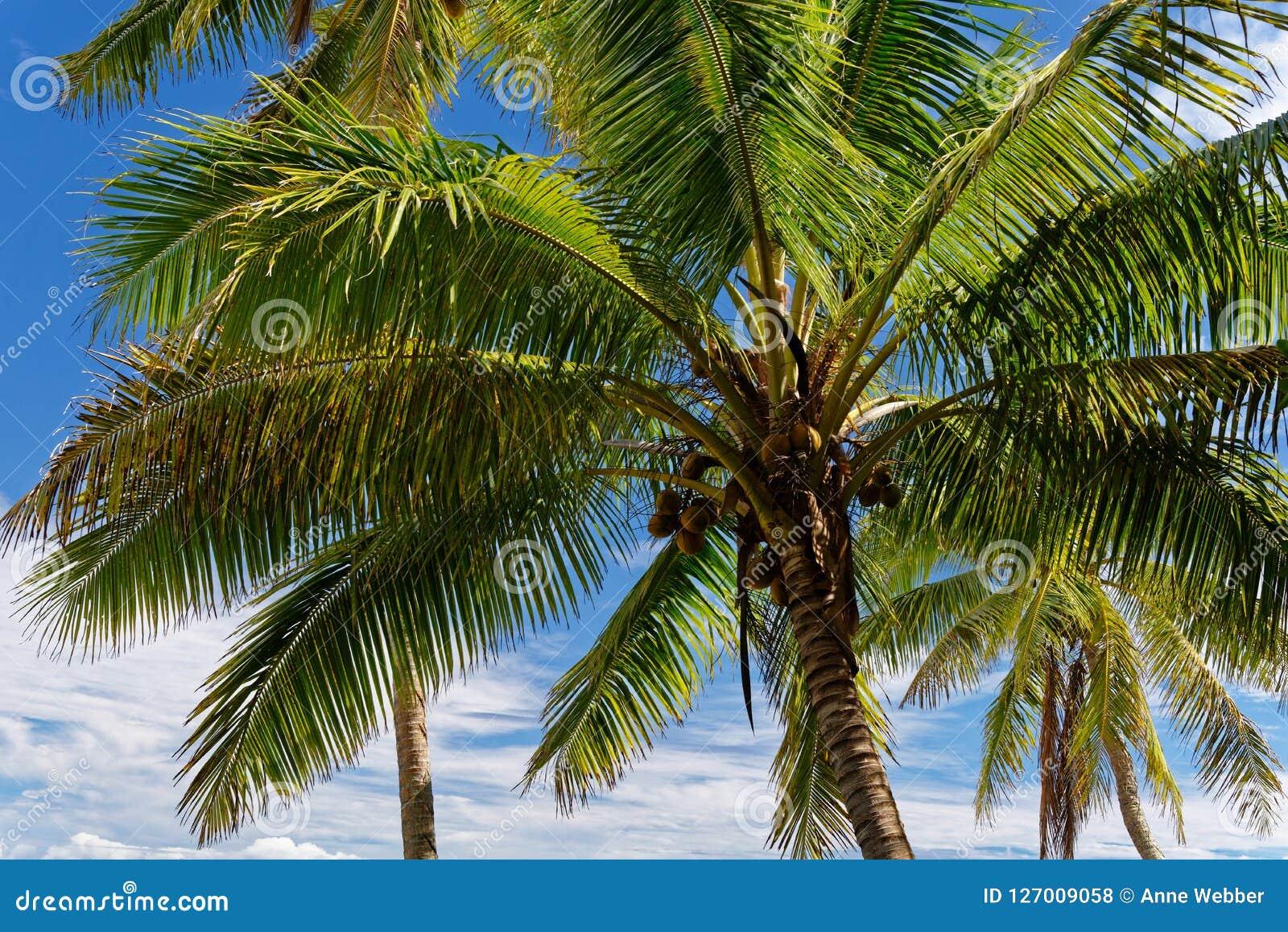 Spoczynkowy i relaks w ten tropikalnym raju pod kokosowymi drzewami i niebieskim niebem