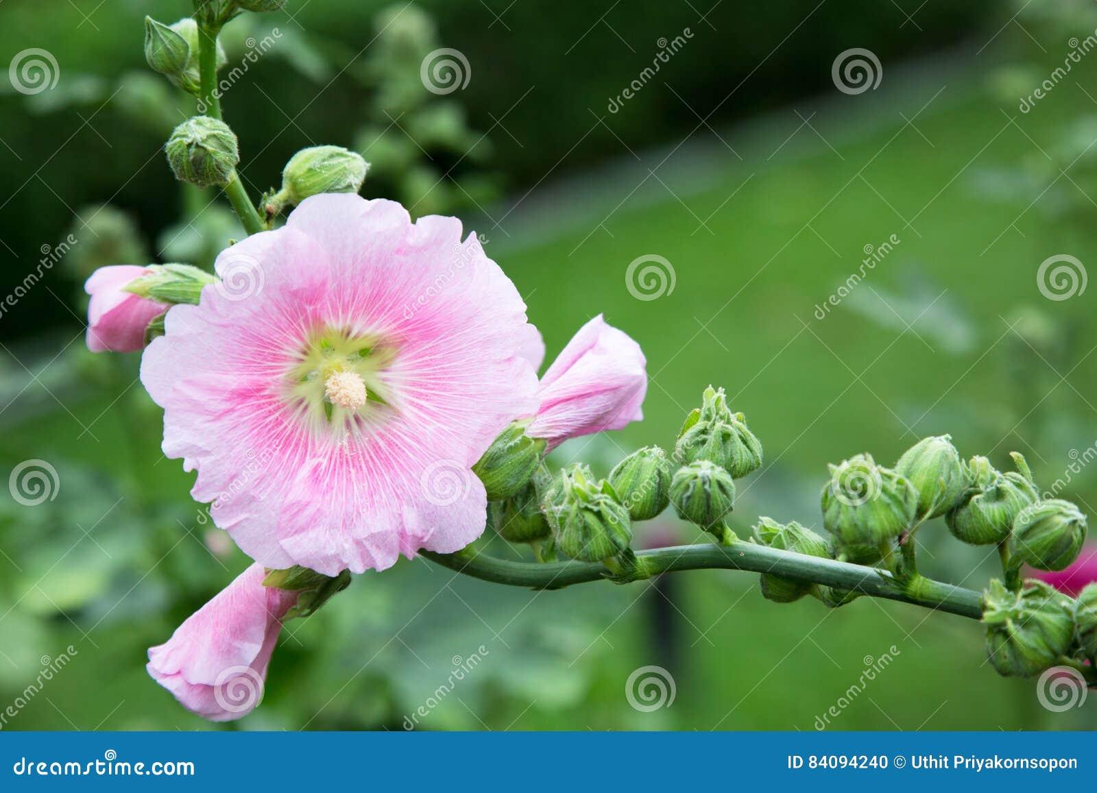 Spodnie drzewny kwiat