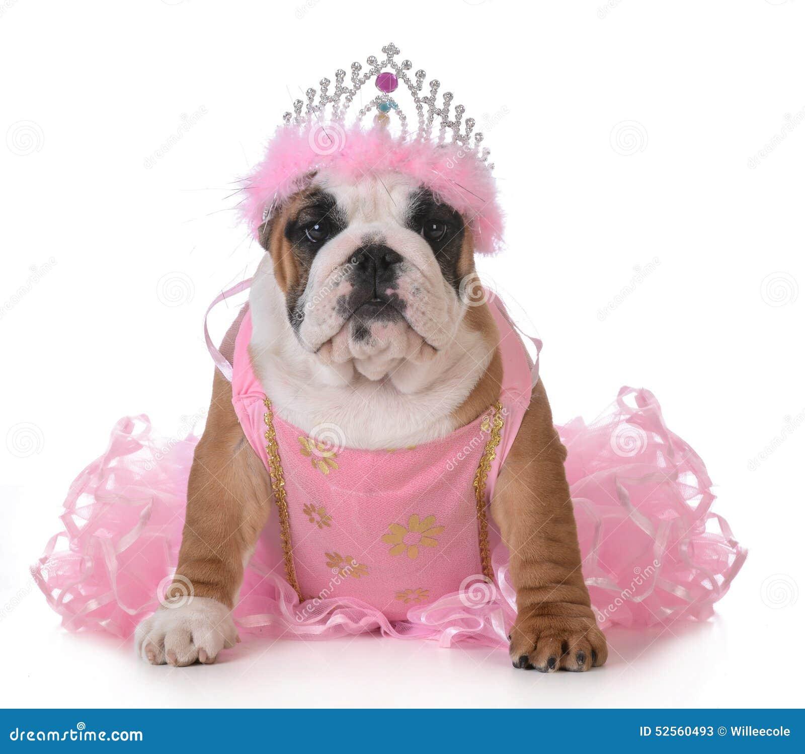 spoiled dog stock photo image 52560493 tiara clip art black and white tiara clipart transparent