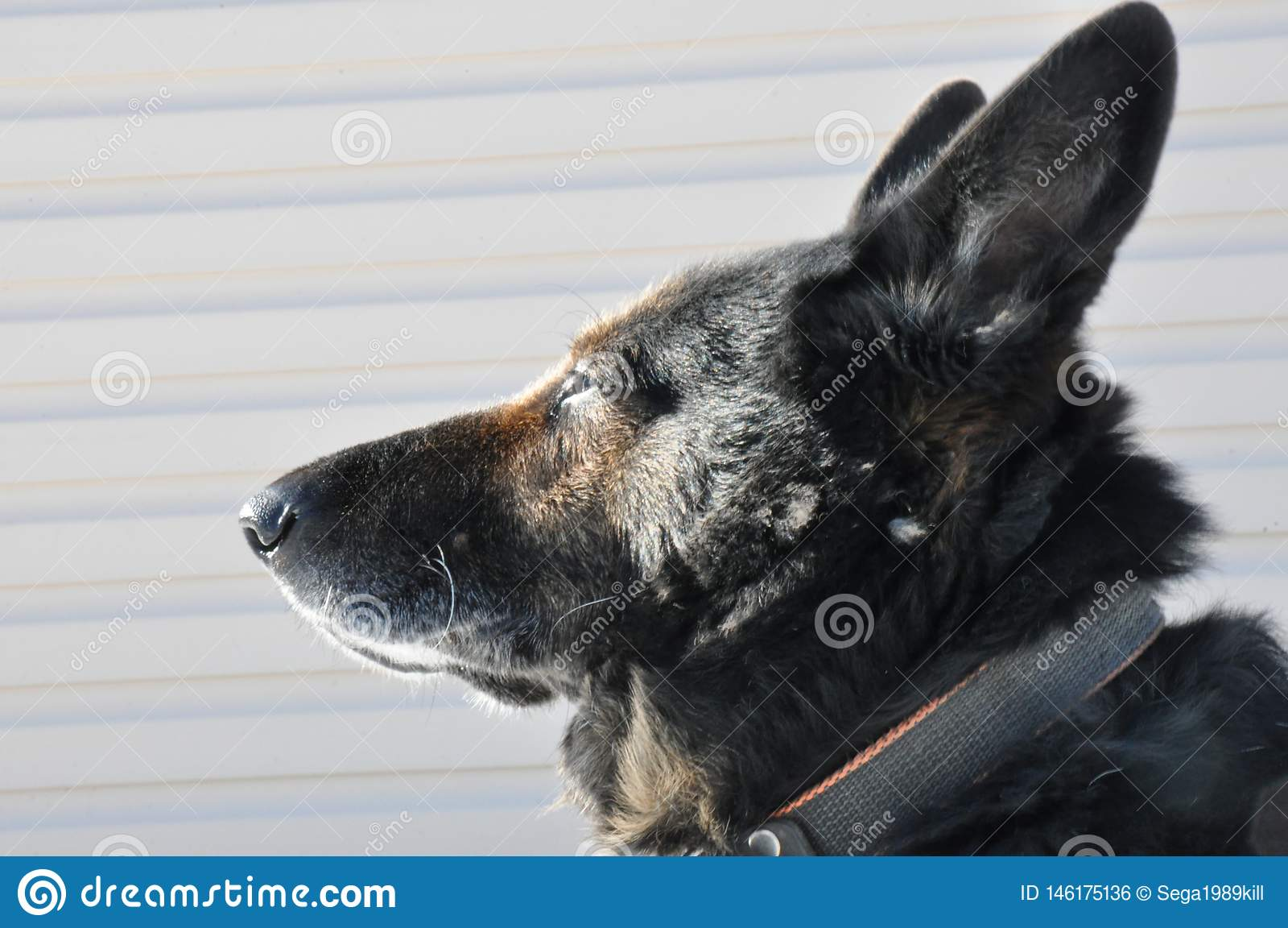 Spojrzenie m?drze psy na s?o?cu