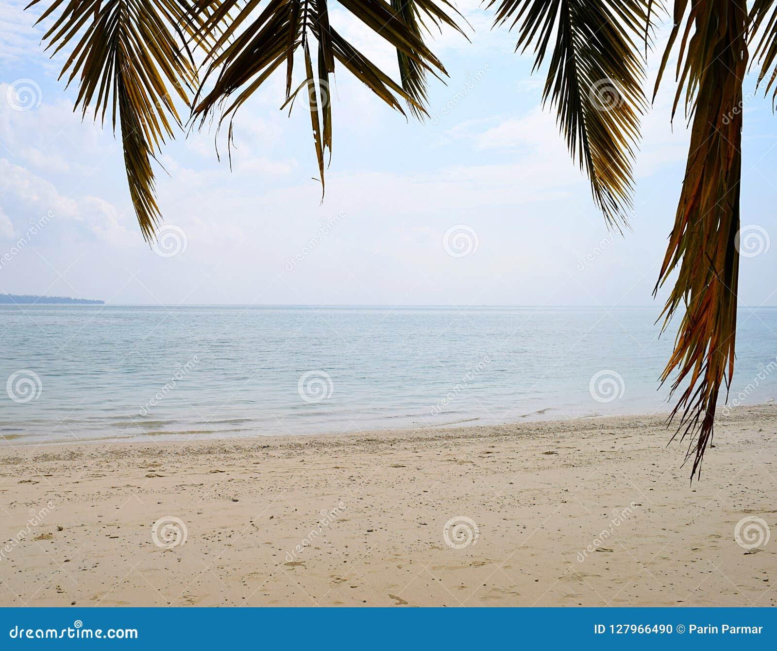 Spokojna i Nieskazitelna Piaskowata plaża z Spokojną wodą morską z palma liśćmi w przedpolu - Naturalny tło