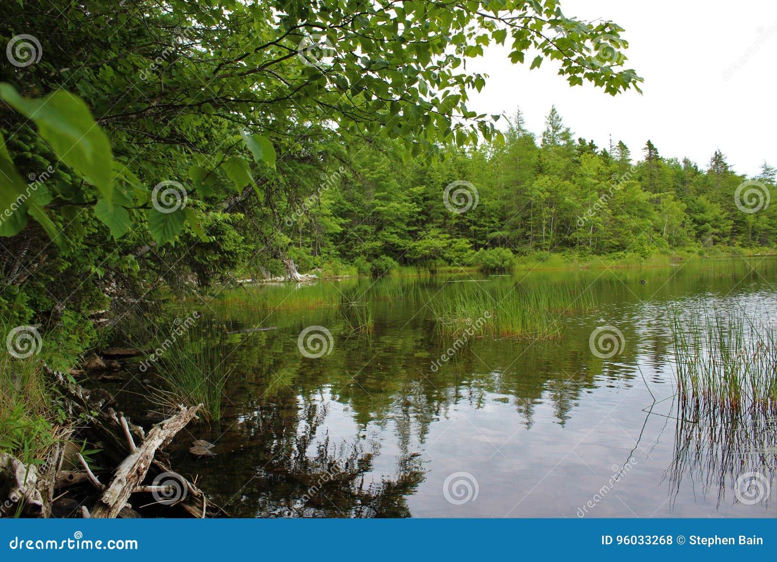 Spokojny jasny słodkowodny rezerwuar w lesie