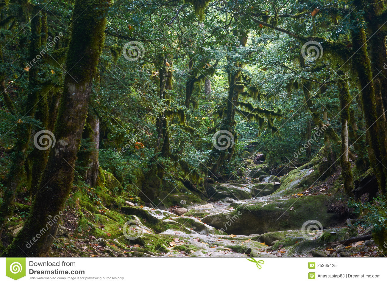 Download Spooky halloween forest stock image. Image of autumn - 25365425