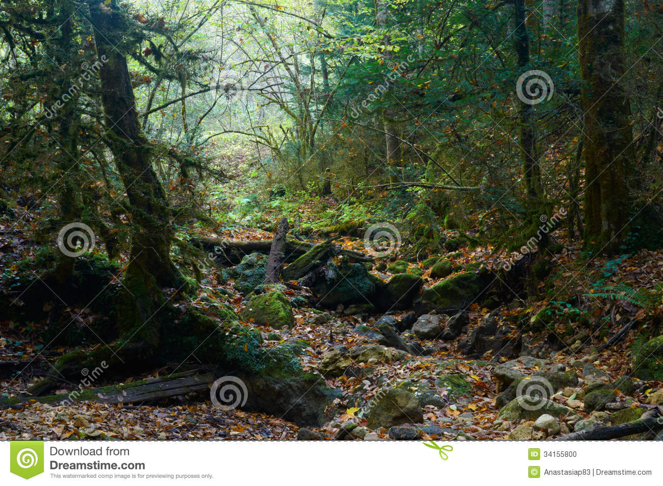 Spooky halloween forest with a fallen tree