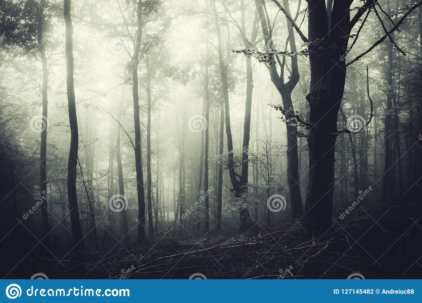 spooky halloween scene in haunted forest