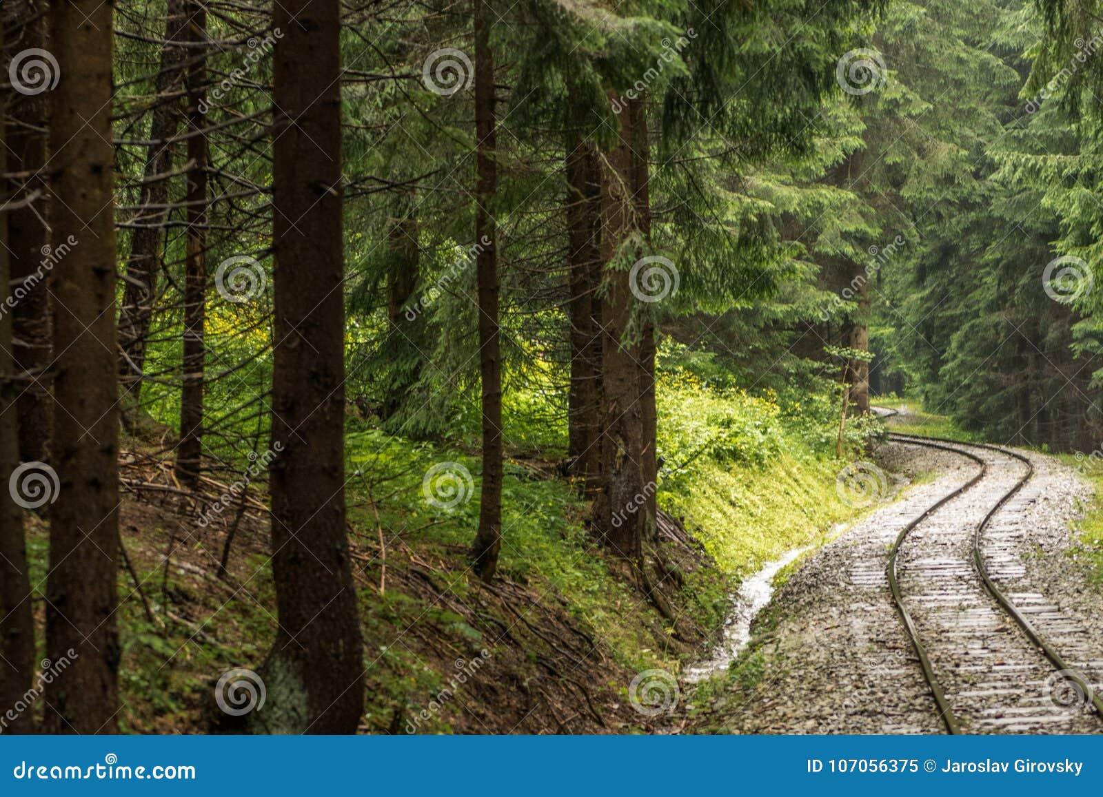 Spoorweg door bos