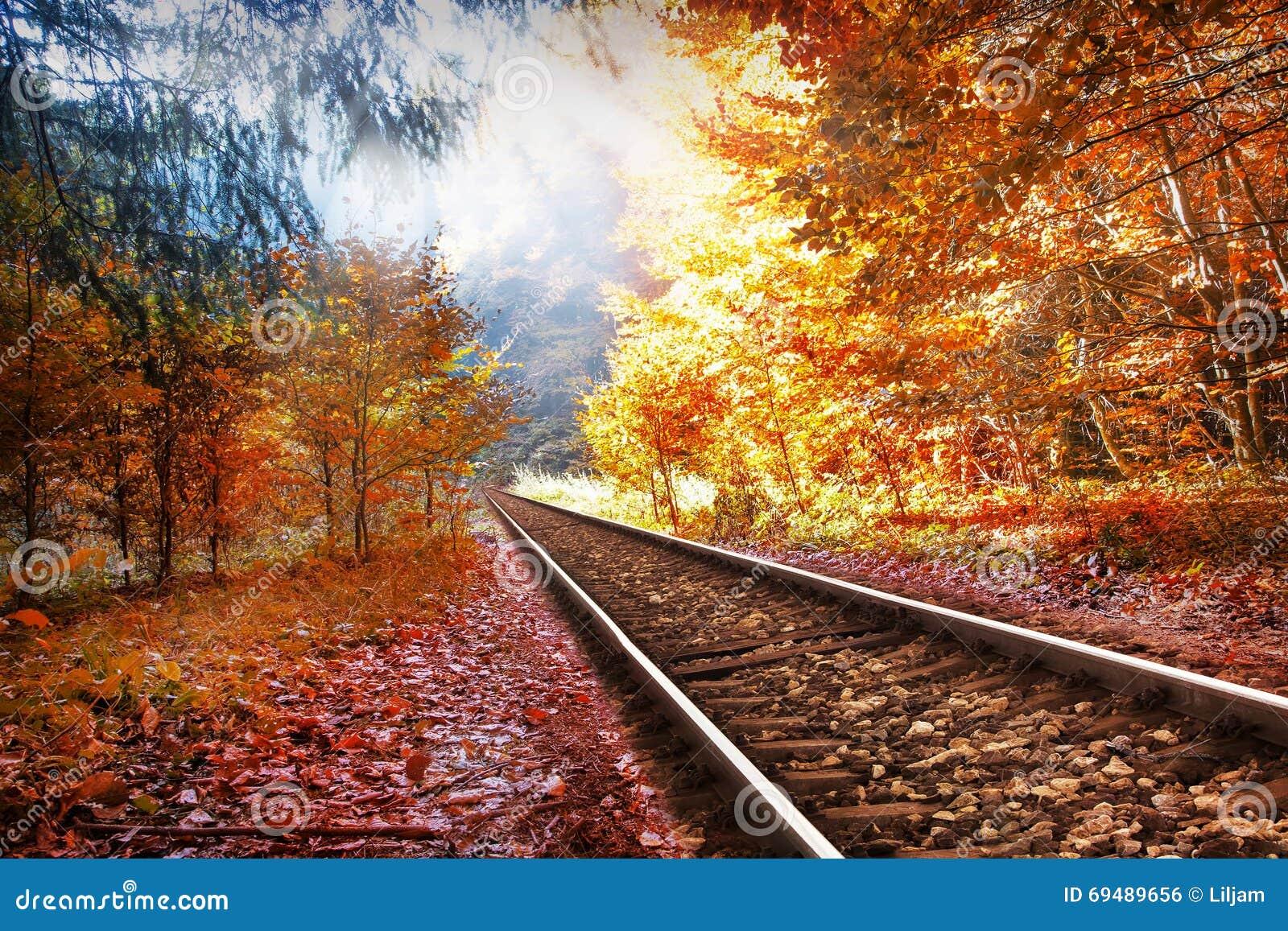 Spoorweg in het de herfstbos
