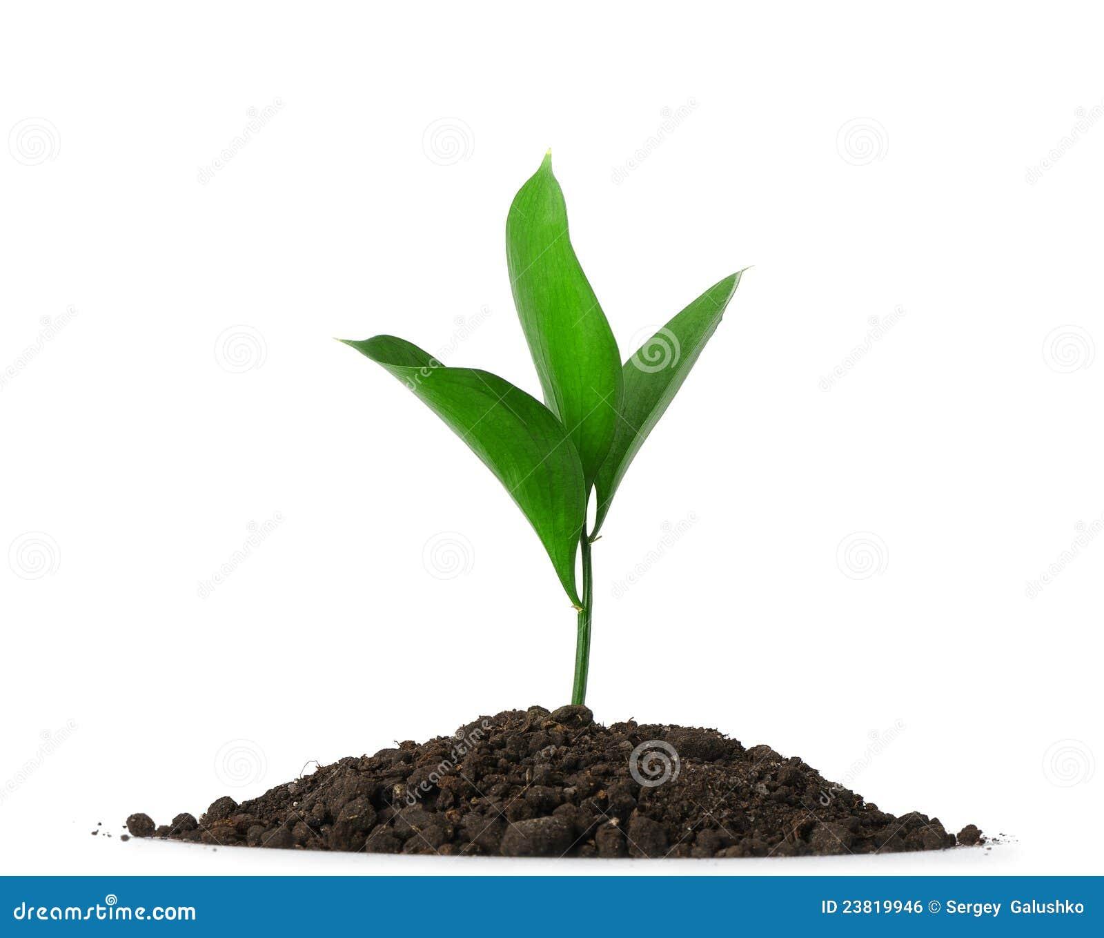 Sporcizia del mucchio con una pianta verde